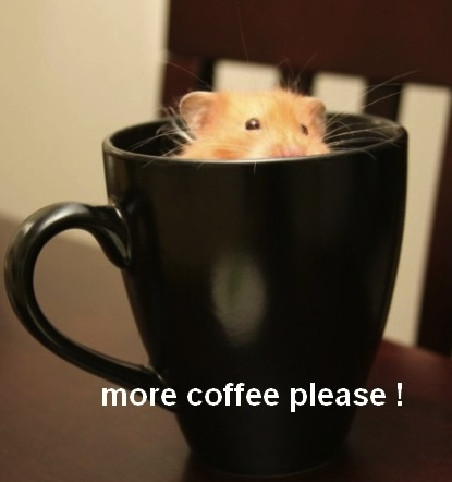 hamster in cup
