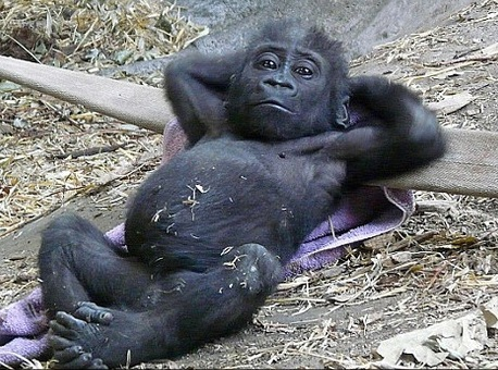 monkey-relaxing.jpg