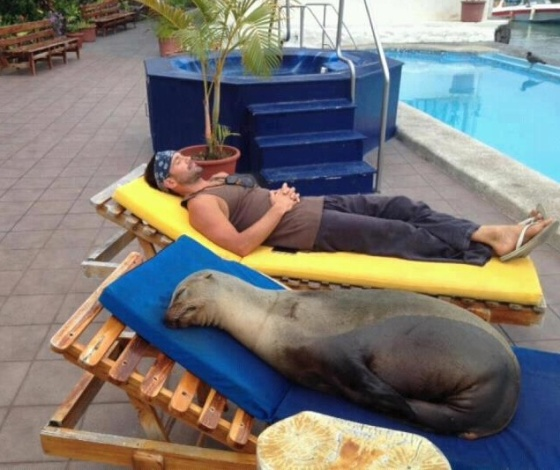 """Taking a nap with the seal of approval."" (Photo credit: www.graphics99.com)"