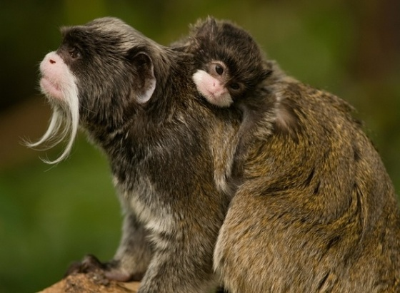 (Photo credit: www.guardian.com)