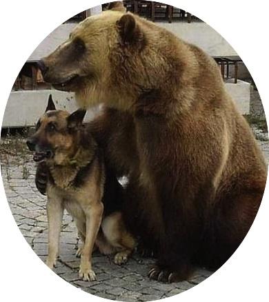 """Bear with me, buddy."" (http://jokeroo.com)"