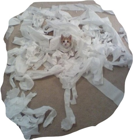 """""""Look at my purrrretty gown."""" (Photo credit: www.pleated-jean.com)"""