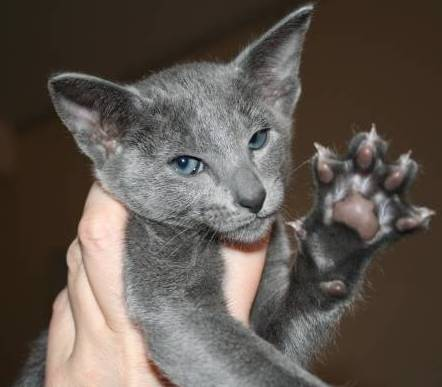 """Purrrfect high-5"" (http://www.manhunters-cat.com)"