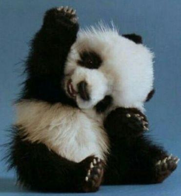 """Pandastic high-5"" (http://www.pinterest.com)"