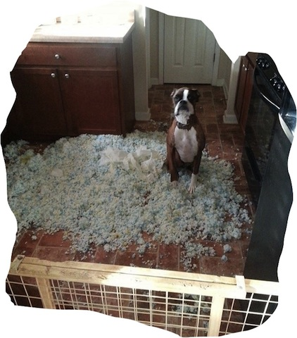 """""""See what claustrophobia made me do!"""" (Photo credit: www.awesomelycute.com)"""