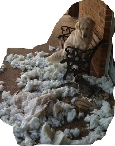 """It wasn't me.  The pillow exploded."" http://www.pinterest.com"