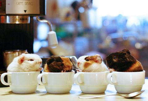 (Photo credit: www.inoholic.com)