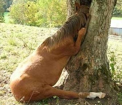 (Photo credit: www.horsecollaborative.com)