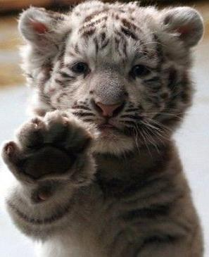"""Roaring high-5"" (http://www.pinterest.com)"