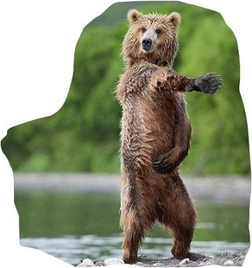"""Bear-ly dance"" http://ozdeyis.net"