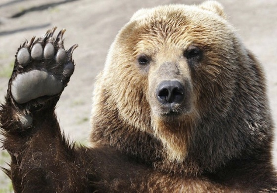 """""""Hope your Monday is bearable."""" http://wallpaperawesome.com"""