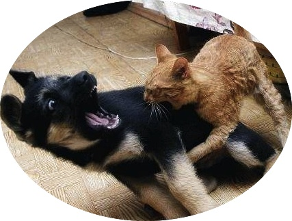 """""""You may be bigger, but I'm the boss."""" http://thefunniestfaces.com"""