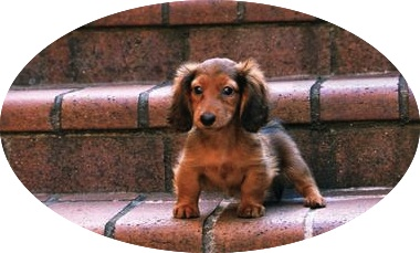 """Tiny but mighty!"" http://animals.desktopnexus.com"