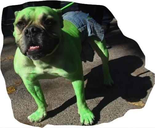"""The pawsome hulk!"" http://ruthlesshumor.com"