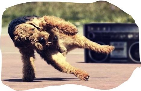 """The pawsome breakdance"" http://smash.com"