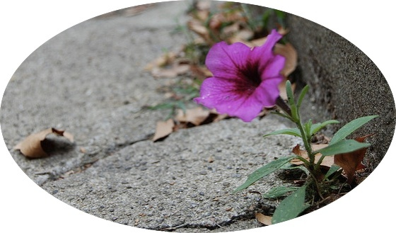flower from a crack