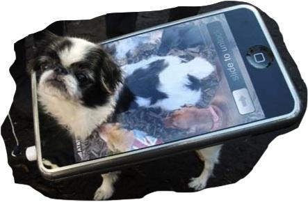 """""""Spook-tacular i-dog!"""" http://buzznet.com"""