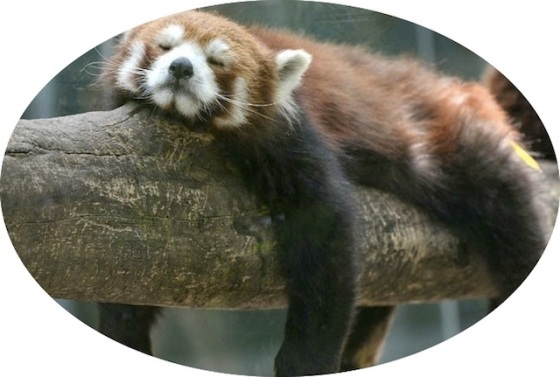 http://amazing-creature.blogspot.com