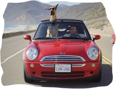 """Let's hit the road, dude!"" http://dogshow.com"
