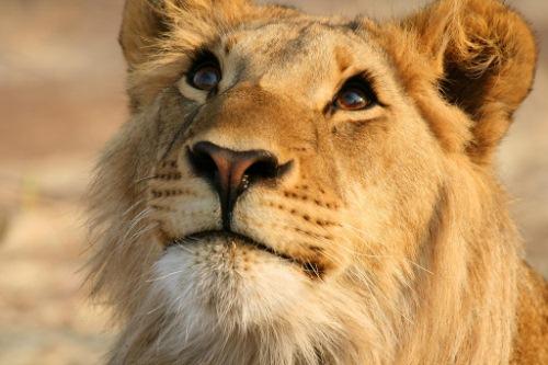 http://animalssafaris.blogspot.com