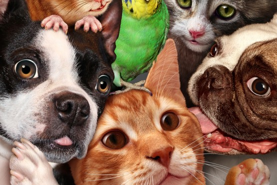 bigstock-Pet-Group-90298439-555x370