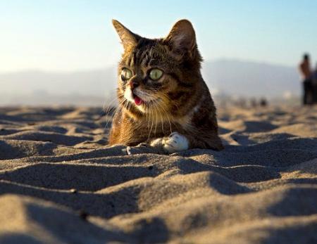 cat lying on sand