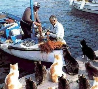 cats waiting for fish