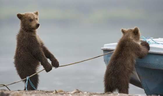 cute bears working together