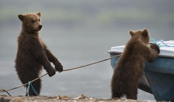 cute bears working together