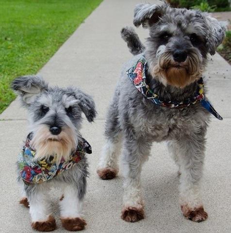 dog twin
