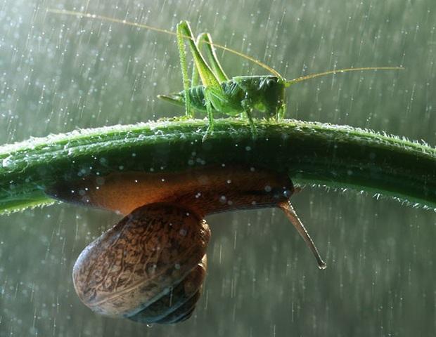 natural-umbrella-shelter-rain-animal-photography-4__880.jpg