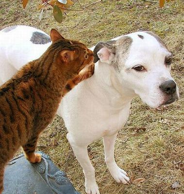 cat gossiping