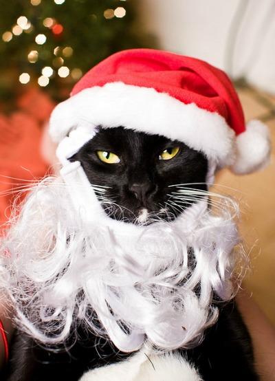 Cat-santa-hat-beard