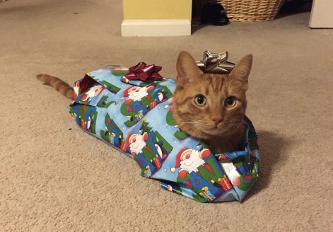 cat wrapped as gift