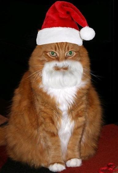 cuta santa cat