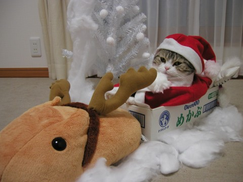 cute cat with reindeer