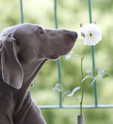 dog loves peace