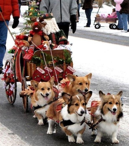 funny dogs with sledge