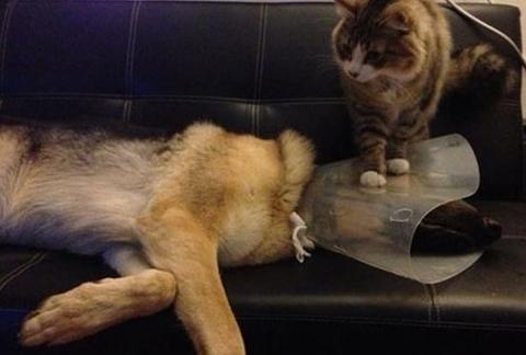 nasty cat