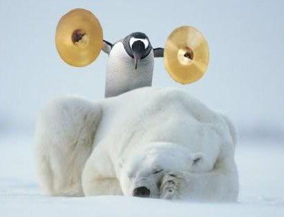 penguin & polar