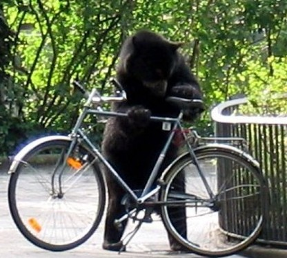 bear and bicycle