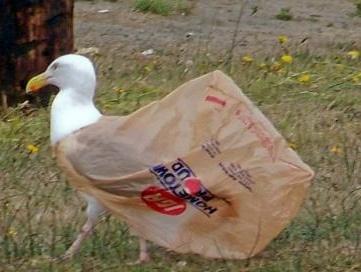 bird with plastic bag