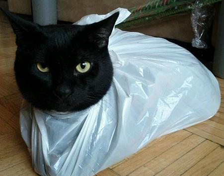 black cat in bag