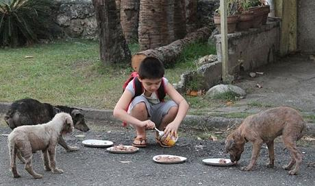 boy feeding stray puppies