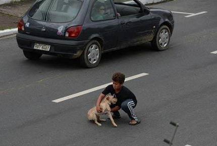 boy saves puppy