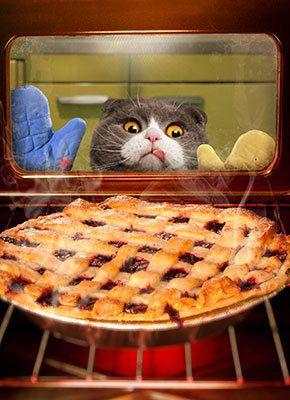 cat baking
