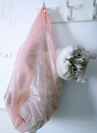 cute cat in plastic bag