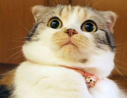 cute cat shocked