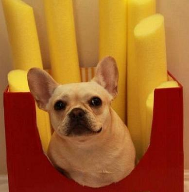 cute dog french fries