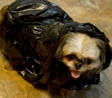 cute dog in garbage bag
